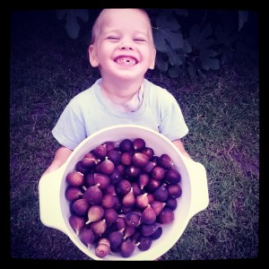 Shmuel with figs in basket